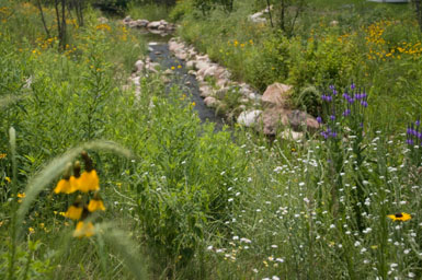 Image: Tier One Landscape naturalizing.