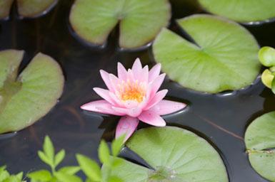 Image: Tier One Landscape water garden.